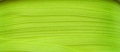 100 Metres Double Satin Ribbon 3mm Lime