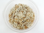 12mm Iridescent Cream 4 Hole Wholesale Sewing Button